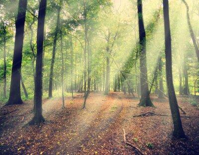 Fotomural floresta mágica em myst com raio de sol