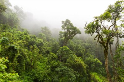 Fotomural Floresta natural em Magoebaskloof