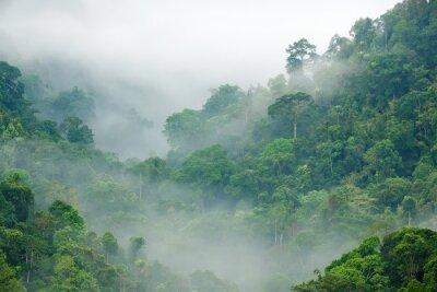 Fotomural floresta névoa da manhã