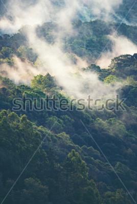 Fotomural Floresta nevoenta em tropical