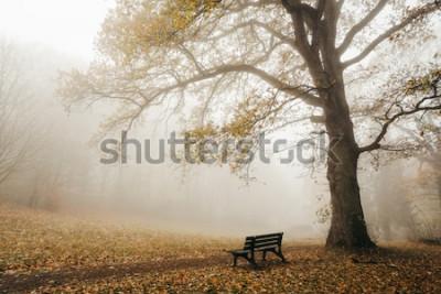 Fotomural Floresta no clima de outono com nevoeiro e sol