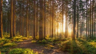 Fotomural Floresta silenciosa na primavera com raios de sol brilhante lindo