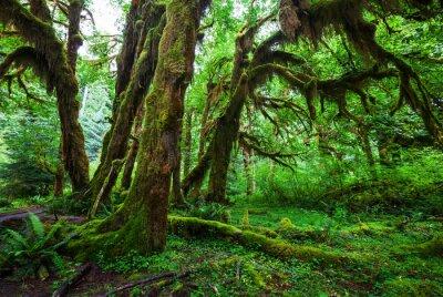 Fotomural Floresta verde