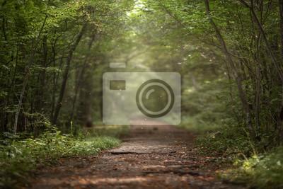 Fotomural Floresta verde lindo de verão. Fundo de primavera, pano de fundo