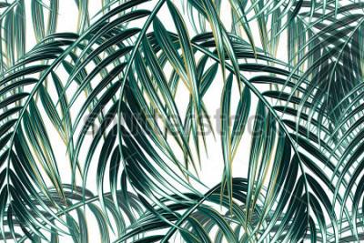 Fotomural Folhas de palmeira tropical sem costura vetor floral de fundo
