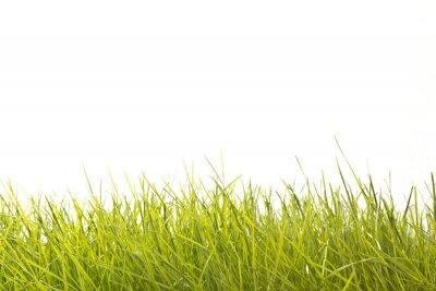 Fotomural Folhas de Relva