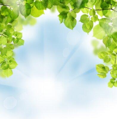 Fotomural Folhas do verão no fundo floral verde