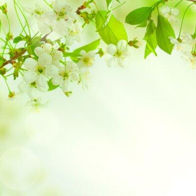 Fotomural Folhas verdes, bela natureza fundo