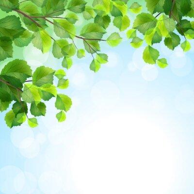Fotomural Folhas verdes ramos da árvore do vetor