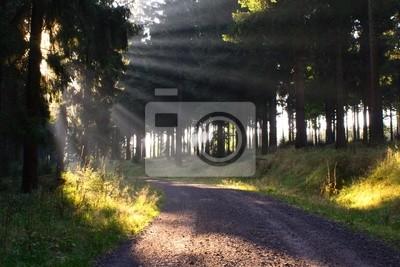 Fotomural forest # 11
