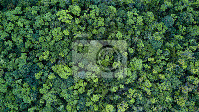 Fotomural Forest and tree landscape texture background, Aerial top view forest, Texture of forest view from above.