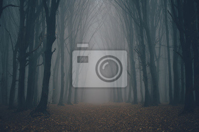 Fotomural Forest in fog with mist. Fairy spooky looking woods in a misty day. Cold foggy morning in horror forest with trees