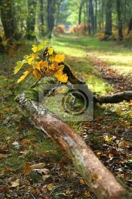 Fotomural forêt
