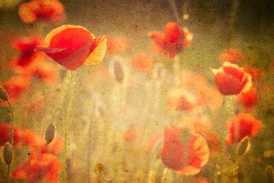 Fotomural Foto de flores de uma papoila