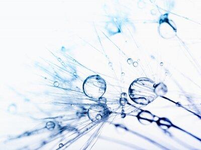 Fotomural Foto macro abstrata de sementes da planta com gotas de água.