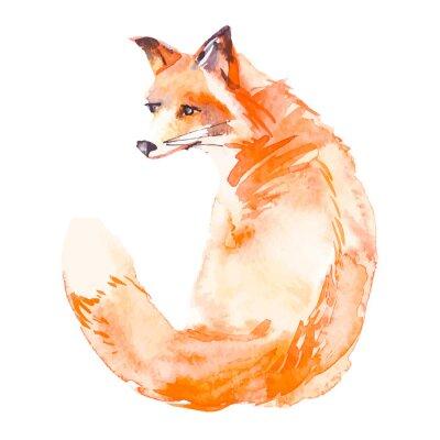 Fotomural Fox isolado no fundo branco. Aguarela. .