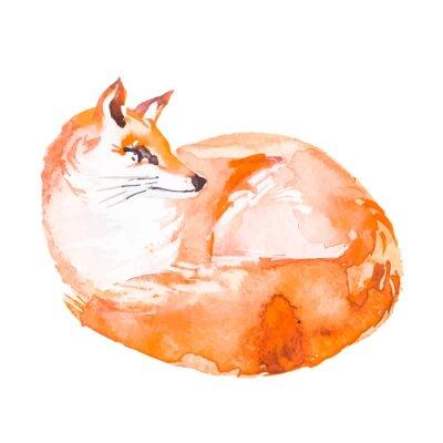 Fotomural Fox isolado no fundo branco. Aguarela. Vetor.