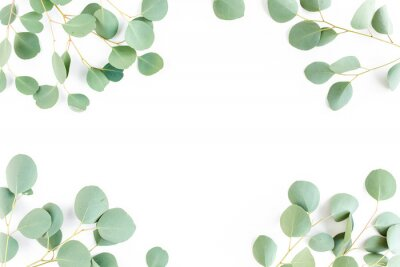 Fotomural frame of green branches, eucalyptus leaves on a white background. flat layout, top view