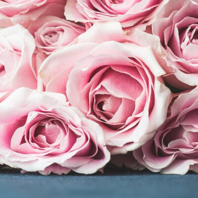 Fotomural Fundo cor-de-rosa brilhante das rosas