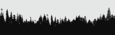Fotomural Fundo da silhueta da floresta.