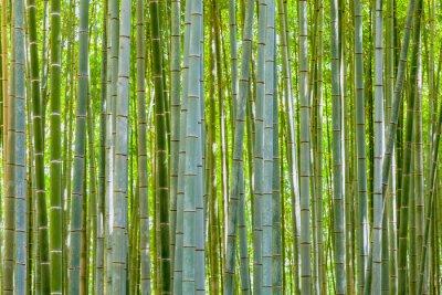 Fotomural Fundo de bambu na natureza no dia