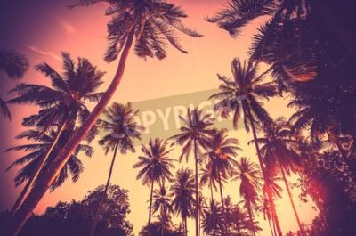 Fotomural Fundo de férias tonificado vintage feito de silhuetas de palmeiras ao pôr do sol.
