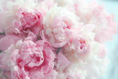Fotomural Fundo de flores peônias rosa fofo