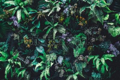 Fotomural Fundo de natureza linda de jardim vertical com folha verde tropical
