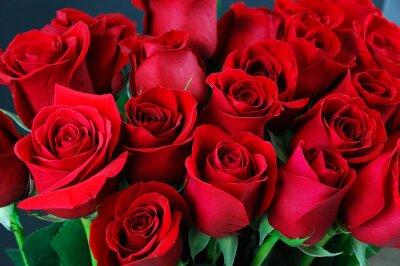 Fotomural Fundo rosa vermelha