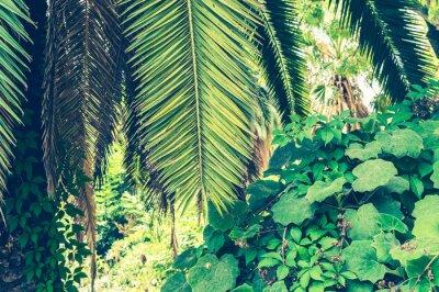 Fotomural Fundo tropical de folhas de palmeira