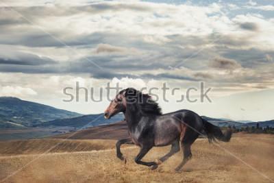 Fotomural Galloping horse