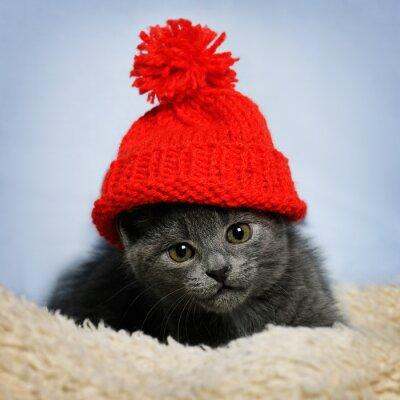 Fotomural Gatinho em um chapéu vermelho