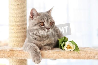 Fotomural Gato bonito deitado no apontador de garra com tulipa em quarto de luz