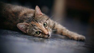 Fotomural Gato listrado triste com bigodes brancos