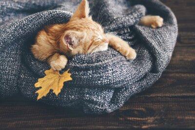 Fotomural Gigner gatinho do sono