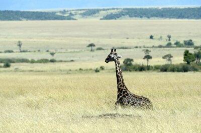 Fotomural Girafa na savana