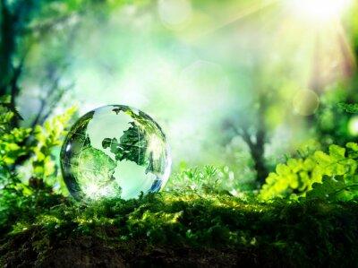 Fotomural Globo de cristal no musgo em uma floresta - conceito ambiente