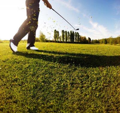 Fotomural Golf swing no campo. Golfista, executa, golfe, tiro