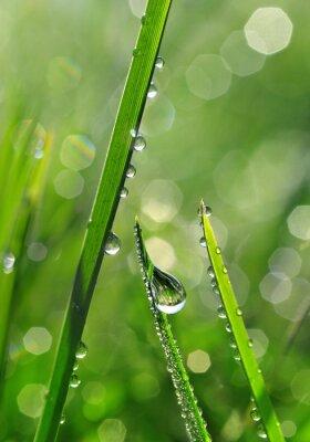 Fotomural Grama verde fresca com gotas de orvalho closeup. Fundo da natureza
