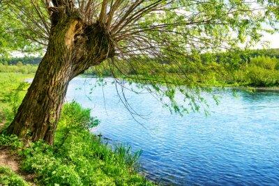 Fotomural Grande, antigas, árvore, Rio, banco