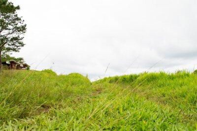 Fotomural grass moutain