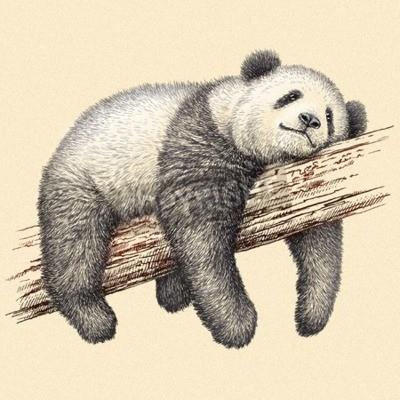 Fotomural Gravar isolado panda urso ilustração esboço. Arte linear