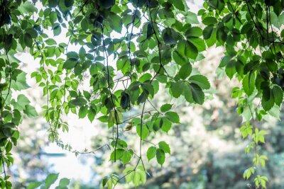 Fotomural green leaves background