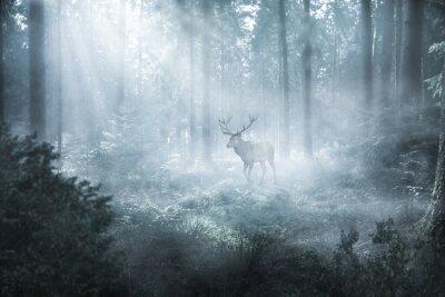 Fotomural Hirsch im nebeligen Wald