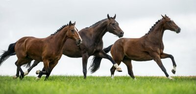 Fotomural Horses galloping in a field