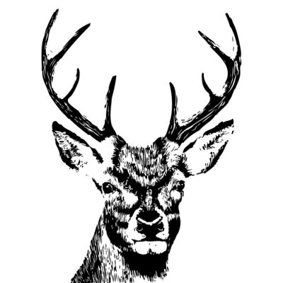Fotomural illustration of a deer head, grunge, silhouette isolated on white