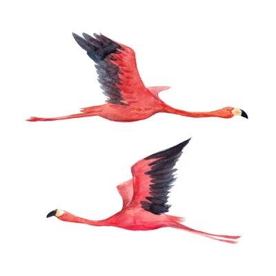 Fotomural Ilustração de flamingo aquarela