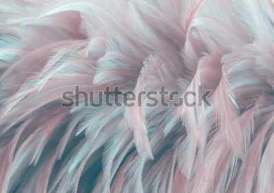 Fotomural Image nature art of wings bird,Soft pastel detail of design,chicken feather texture,white fluffy twirled on transparent background wallpaper Abstract. Coral Pink color trends and  vintage.