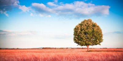 Fotomural Isolado, árvore, tuscany, wheatfield, (Tuscany - Italy) - toned, imagem, cópia, espaço