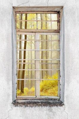 Fotomural Janela da casa de cimento velho com vista da floresta